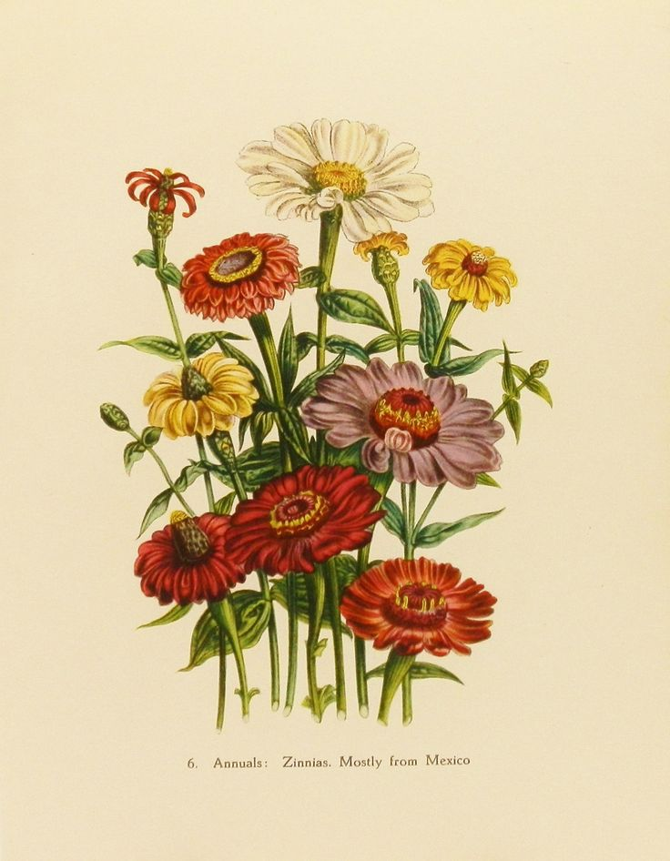 Flowers In The Victorian Era